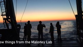 More great things from the Maloney Lab!
